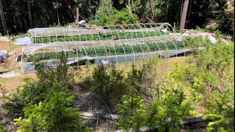 hoopers greenhouses hcso