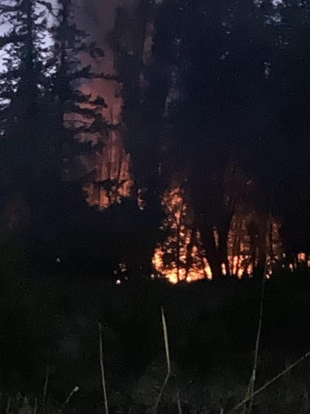 Flames seen through the trees.